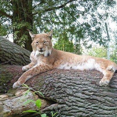 © Tierpark Wismar